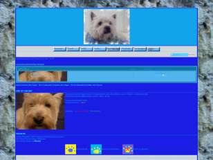 _hunde_