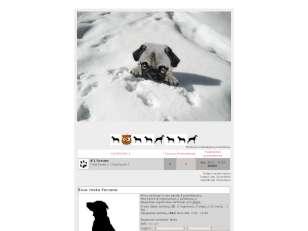 White dog :)