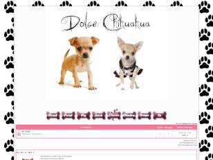 Dolce chihuahua