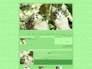 Chats printemps 1