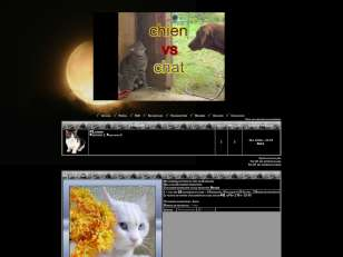Chien vs chat