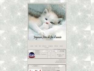 Theme Decembre Cats