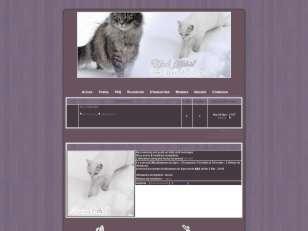 World of Cats (CF)