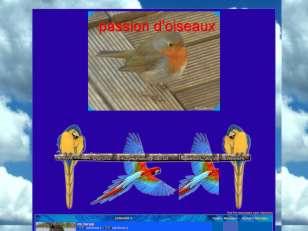 Passions d'oiseaux