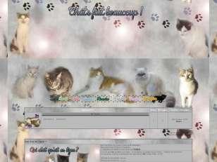 Chats fait beaucoup