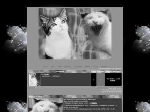 ♦ warriros cats, noir ...