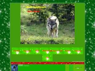 Loups wolf