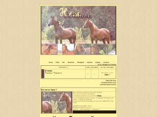 Horse attitude thme 3