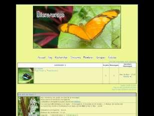 Papillons de guyane