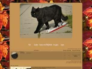 Katzen des waldes 2