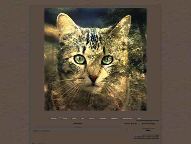 Warrior Cats Braun