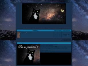 Chat nuit étoilée