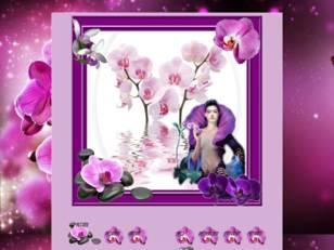 Les orchidées rose