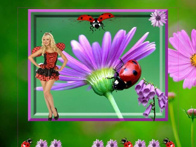 Des fleurs et des Coccinelles