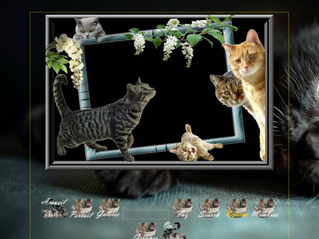 Les chats ces pachats