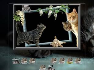 Nos amours de chats