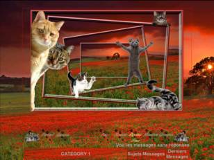 Chat coquelicot