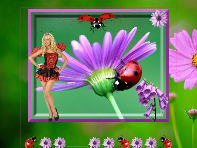 Coccinelles et jolies fleurs