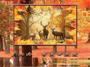 Beautés d'automne