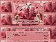 St valentin rose bonbo...