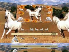 Chevaux blanc jean-louis