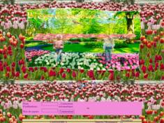 1) tulipe printemps ch...
