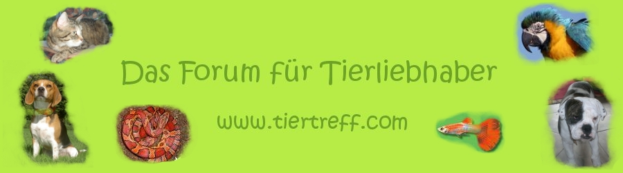Haus-Tier-Treff
