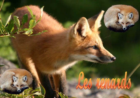 piégeage et chasse en France