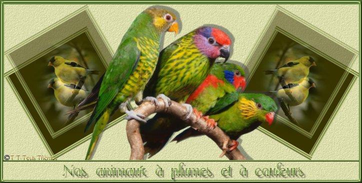 Passion-oiseaux