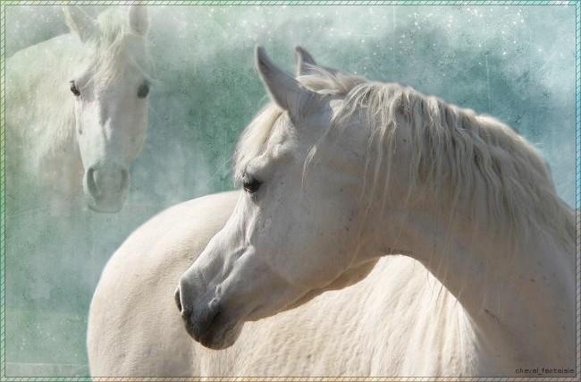 Mon amour des chevaux