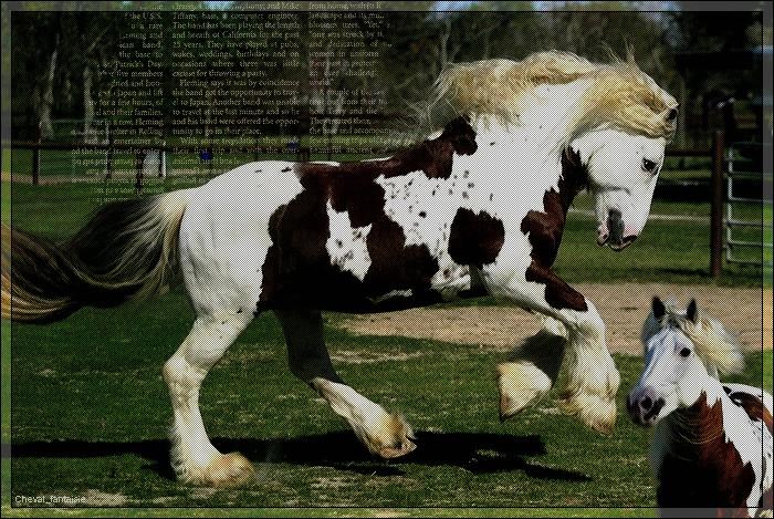 Horses-life