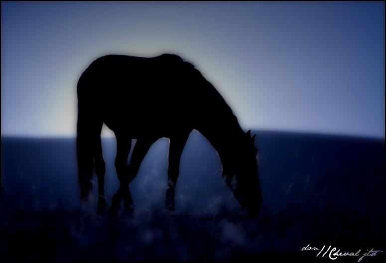 Horse Moon