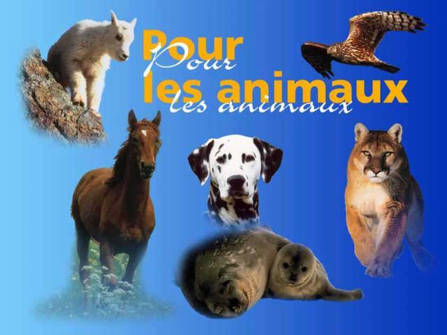love-animal