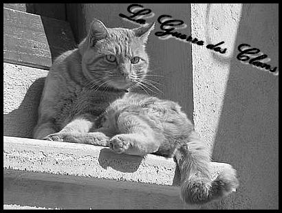 L'école du chat libre Caillerot