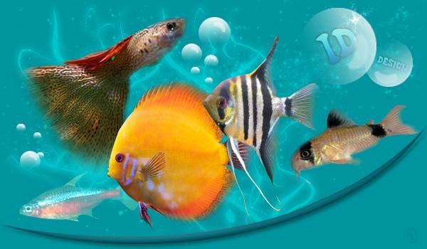 club aquariophile chalonnais