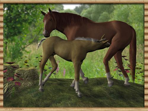 Pferde Forum