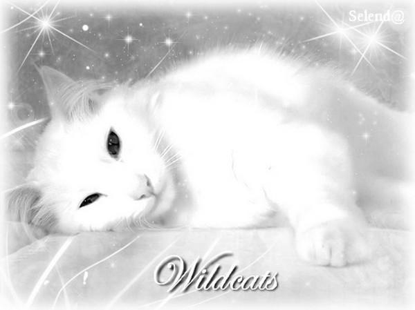 les chats du Lauragais