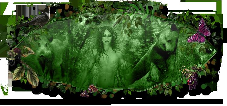 La survie dans la forêt
