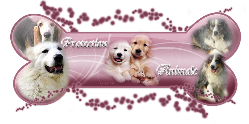 Protection animaux,animaux,vidéo animaux