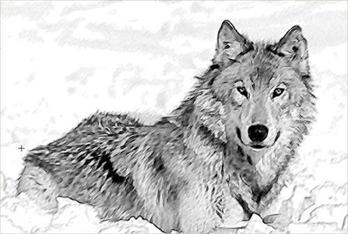 El Aullido De Los Lobos