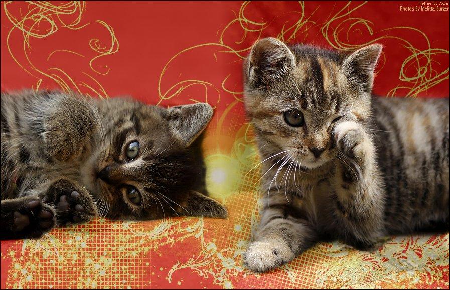 La maison des chats  Ludogcat Regio