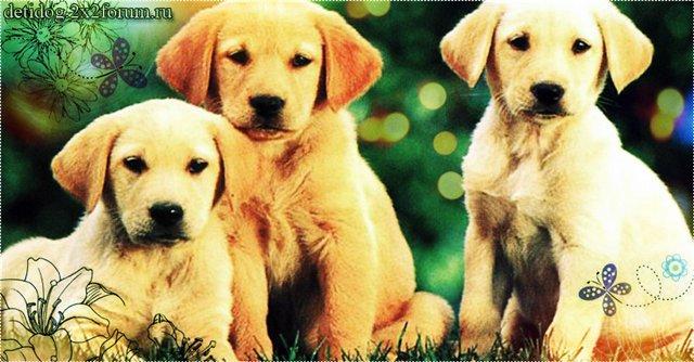 Собачки и их Хозяюшки!!