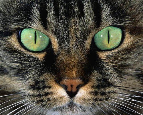 Katzen der Nacht