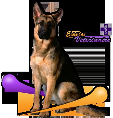 Emploi Vétérinaire