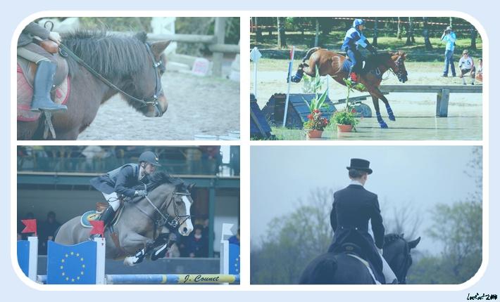L'Ecole Equestre De L'Etoile Bleue