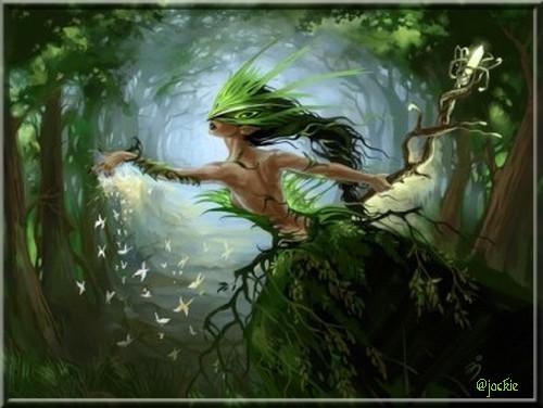 La Forest des Andaines
