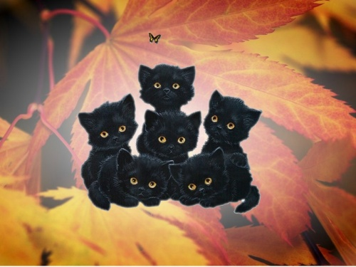 Warrior Cats. (: