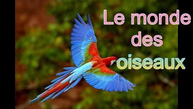 la passion des  oiseaux de toutes les couleurs