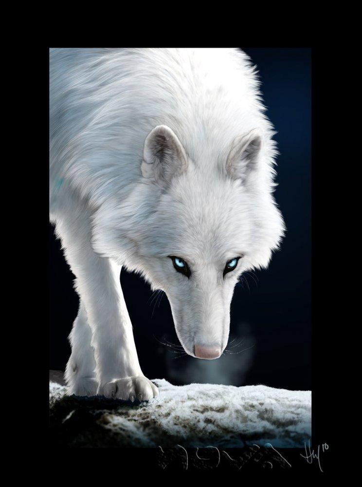 Картинки волки - 8