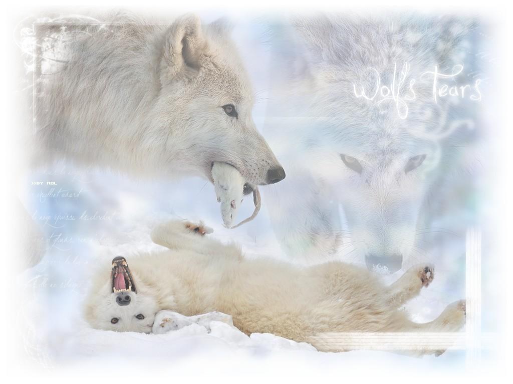 Esprit des loups